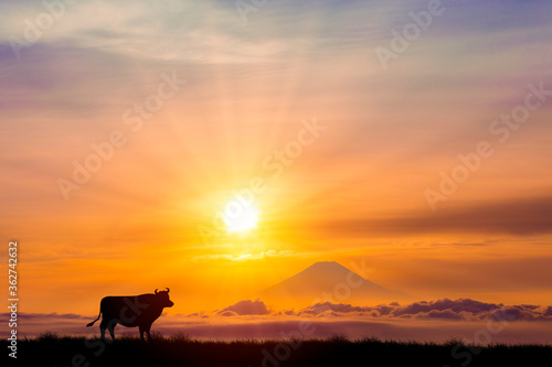 Photo 牛と朝日