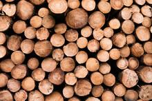 Shot Of Logs