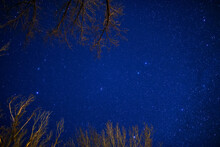 Low Angle View Of Trees Against A Starry Sky At Night