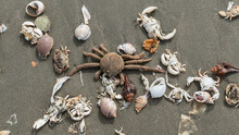 High Angle View Of Dead Crabs With Conch Shells On Sand At Beach