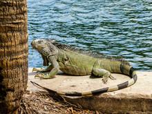 Lizard At The Boardwalk // Flo...