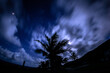 canvas print picture - Low Angle View Of Silhouette Palm Trees Against Sky At Night