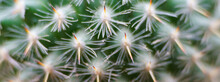 Macro Photography Of A Dendrit...