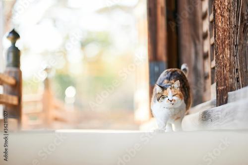 Valokuva 木の建物でストレッチしている猫