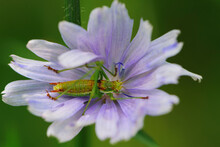 Close-up Of A Grasshopper Sitting In A Flower