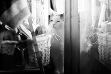 Portrait Of Cat By Window At Home
