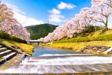河川沿いの桜並木