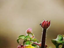 Close-up Of Pink Flowering Plant With A Spider