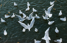 High Angle View Of Seagulls Swimming In Lake