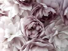 Softer Hintergrund, Floral Mit Kirschblüten, Hochzeit Und Feierlicher Anlass