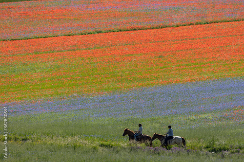 Photographie Castelluccio di Norcia, Italy - July 2020: hiking and horse riding along a color
