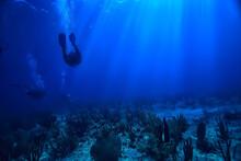 Diver Underwater Unusual View,...