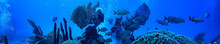 Coral Reef Underwater Landscap...