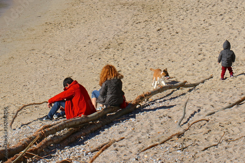 People And Dog With Driftwood At Beach Fototapeta