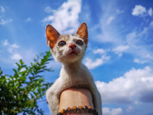 Low Angle View Of A Cat Looking Away Against Sky