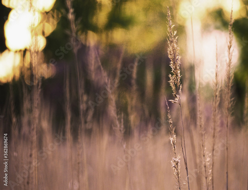 spring grass in a meadow with shallow depth of field Canvas Print