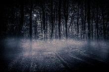 View Of Trees In Forest At Night