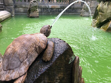 Turtle Spouting Waters In The ...