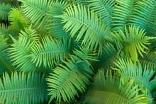 Full Frame Shot Of Palm Tree L...