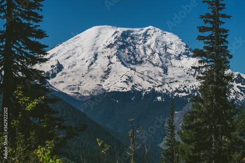 Mount Rainier Between Trees and Blue Sky
