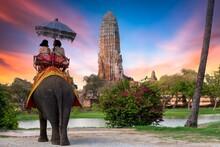 The Elephant For Tourist Servi...