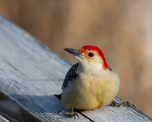 Close-up Of Bird Perching On W...