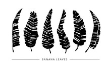 Black Paint Brush Banana Leaves Vector Collection. Set Of Black Silhouettes Banana Leaves. Hand Drawn Tropical Foliage, Herbs, Plant Branches. Vector Ink Elements Isolated On White Background.