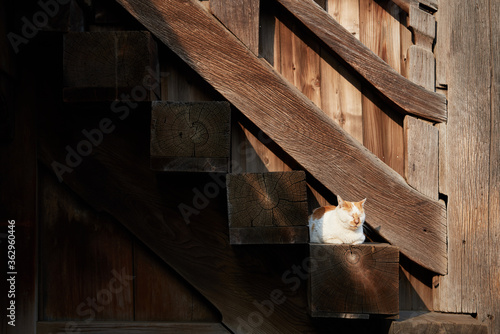 Cat Resting On Wooden Stairs Fototapet