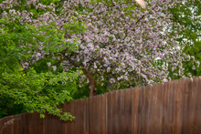 Flowering Plants By Fence Against Trees
