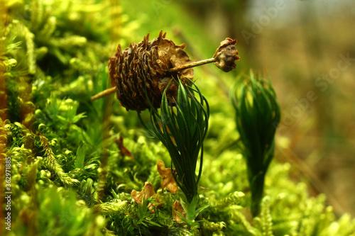 Fototapeta leśna abstrakcja  obraz