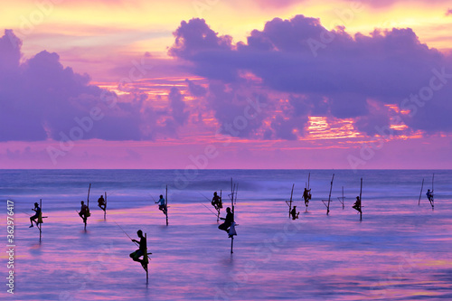 Fototapeta Fishermen on stilts in silhouette at the sunset in Galle, Sri Lanka
