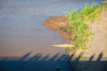 High Angle View Of Crocodile On Beach