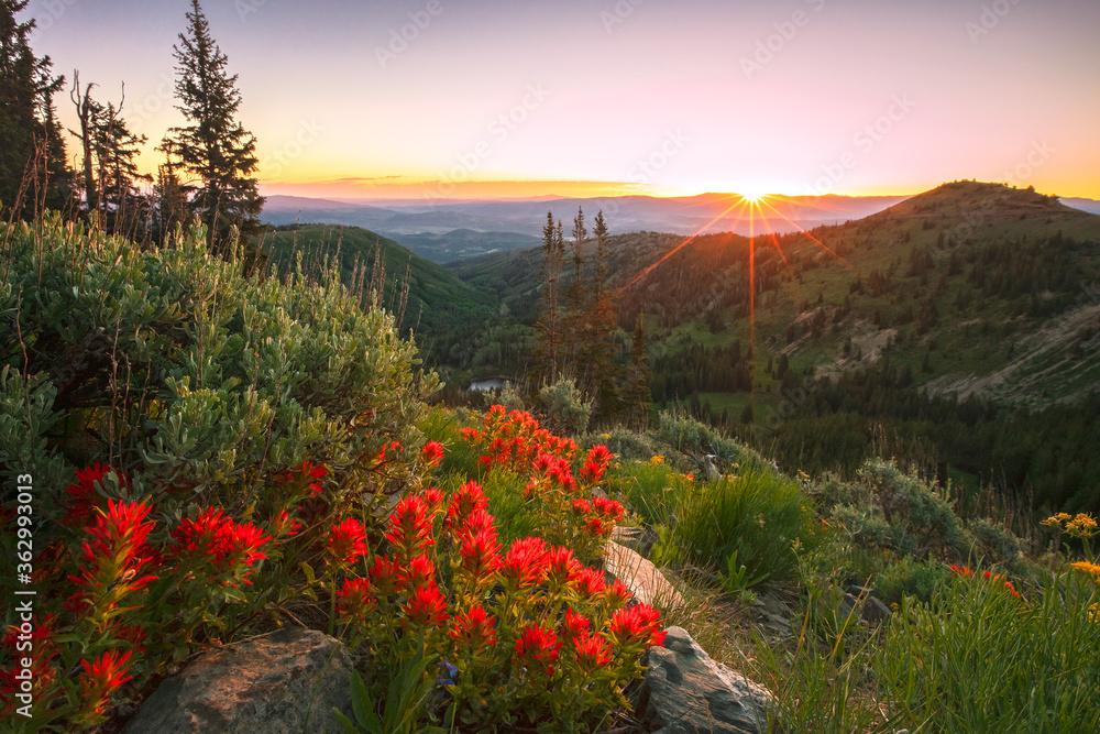 Fototapeta Summer wildflowers above Park City, Utah, USA.