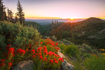 Obraz na Szkle Góry Summer wildflowers above Park City, Utah, USA.