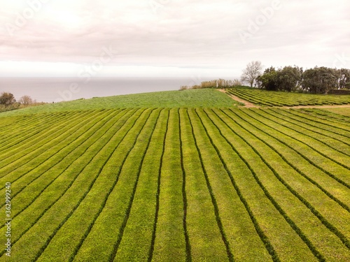 Fotografiet Scenic View Of Agricultural Field Against Sky