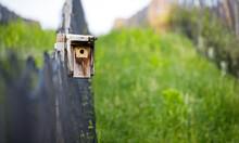Tiny Bird House Next To A Grap...