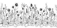 Seamless Horizontal Background With Wild Herbs And Flowers.