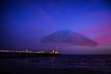 A Murmuration Of Starlings At Sunset Over Brighton Pier