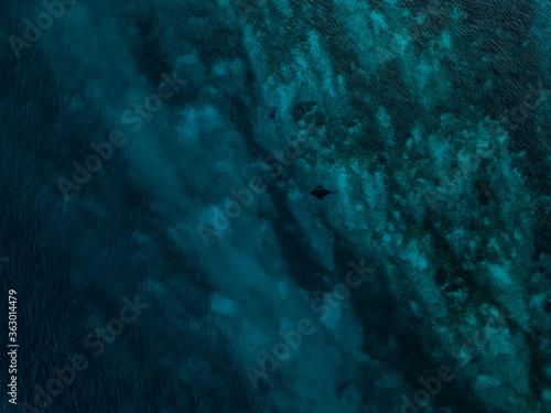 Obraz na plátne View Of Jellyfish Swimming In Sea