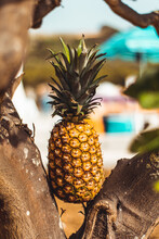 Close-up Of Pineapple On Tree Outdoors