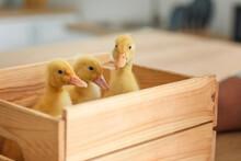 Cute Funny Ducklings In Wooden...
