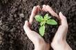 Leinwandbild Motiv Cropped Hands Holding Plant With Soil