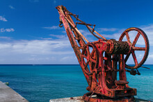 Red Crane In The Caribbean