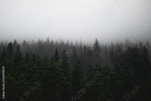 Trees In Forest Against Sky Fotobehang
