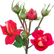 Red Rose Two Blooms And Six Bu...