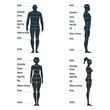 Male and female size chart anatomy human character, people dummy front and view side body silhouette, isolated on white, flat vector illustration.