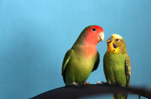 A Close Up Of Two Green Parrot...