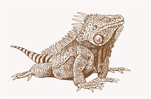Vector Iguana , Sepia Backgrou...