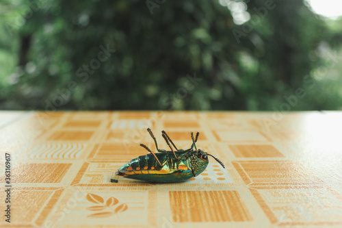 Close-up Of Insect On Table Canvas
