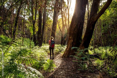 Canvas Print Hiker walking in the Australian bushland